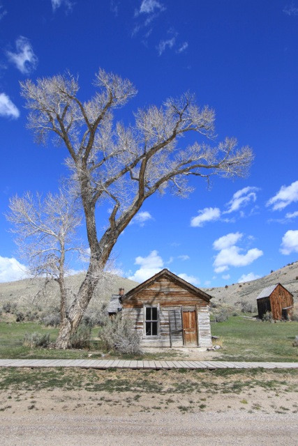A modest cabin is pictured beneath a cottonwood tree off the main drag of Bannack ghost town.