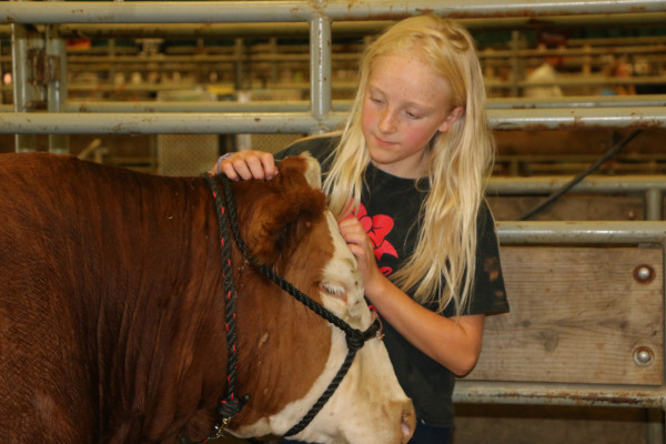 Josee Reiter took fourth place with her heifer. Her brother, Jake, was also showing a heifer and a steer.