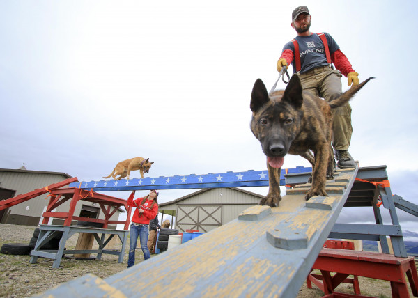 Svalinn protection dog trainer Brett Skinner leads Patriot down a ramp as trainer Kayla Polillo works with Olympic on an obstacle course on May 25.