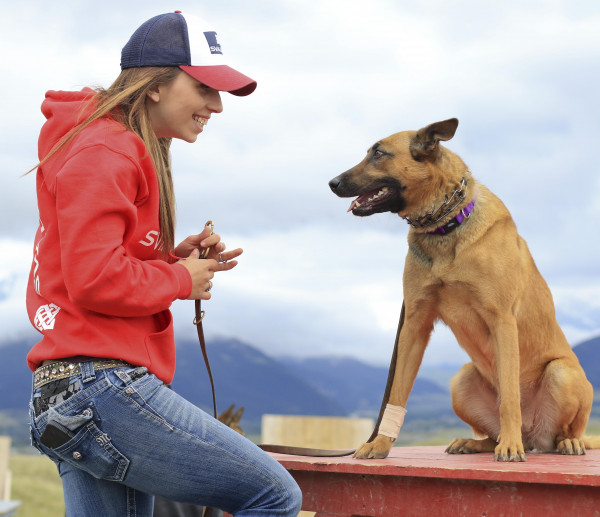 Svalinn protection dog trainer Kayla Polillo works with Olympic on an obstacle course on May 25.