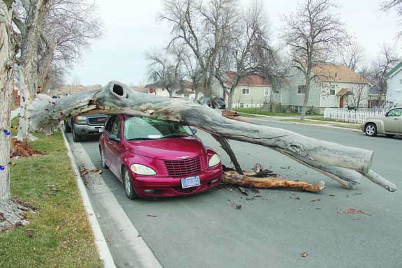This car parked on Cottonwood Ave. sustained quite a bit of damage, not to mention a new hood ornament, after a windstorm dropped a tree on it last Thursday night. The owner woke to find she wasn't going anywhere on Friday.