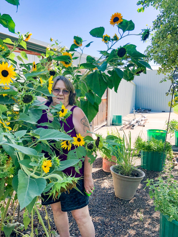 Dorothy Libbe came in third. Her sunflower reached 10 feet 7 inches.