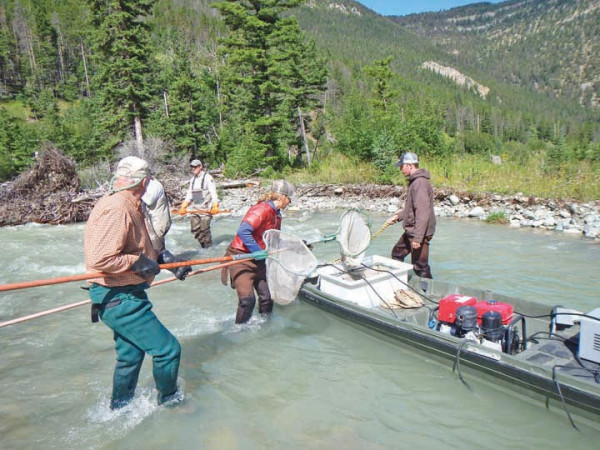 Community volunteers study fish populations in the East Boulder River as part of the Good Neighbor Agreement. Courtesy photo