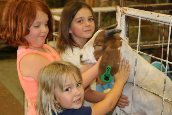 Fortuitously for these girls who wanted to pet the goat, he got his head stuck in a pen. They helped him out of his predicament after getting their fill of goat love.