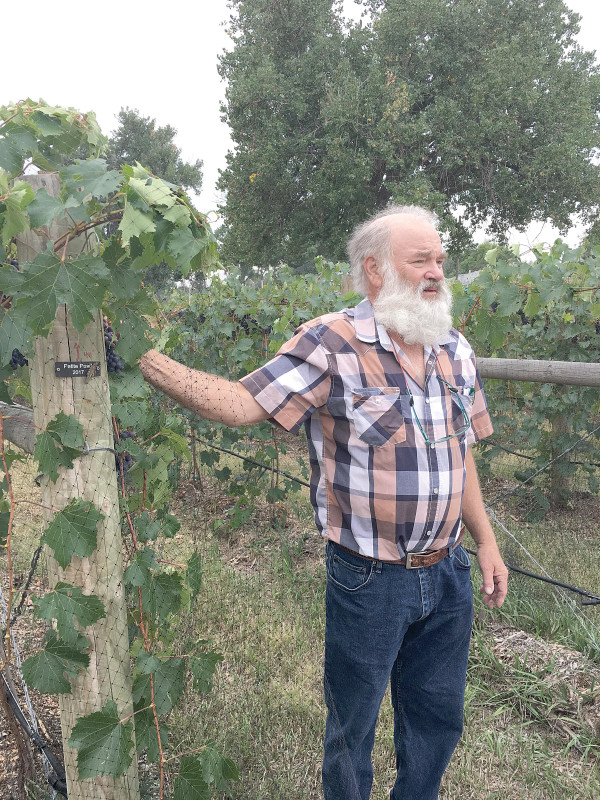 Larry Robertson, owner of Flathead Lake Winery, was one of two grape growers who attended a tour at the Felder Vineyard in Laurel last week. The growers showed enthusiasm for the future of cultivating grapes in the Yellowstone valley.