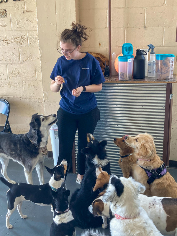Dogs sit for goodies while one of the dog care assistants doles out treats.