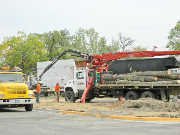 A crew cleans up after trees were removed from a traffic triangle at the intersection of 1st and 4th Streets and Washington Avenue.