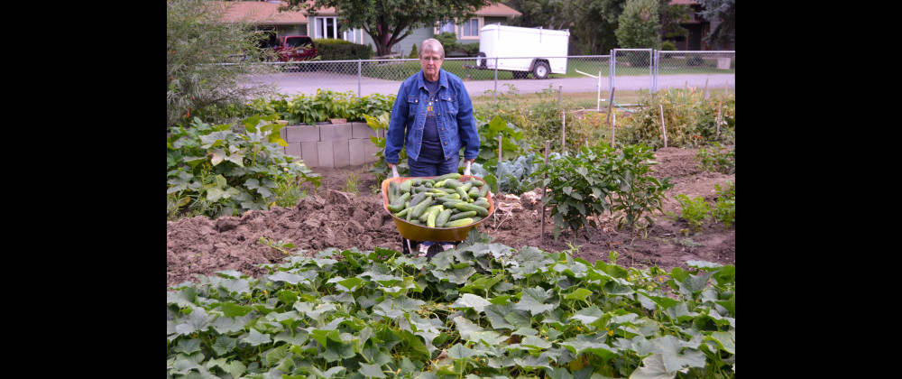 Karla Field shows off this part of this year's cucumber harvest.